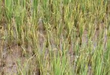 drought in 9 districts of odisha