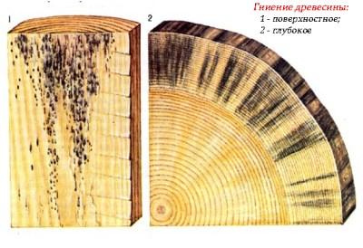 гниение древесины