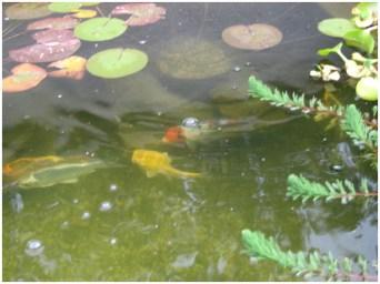 39 рыбки в пруду