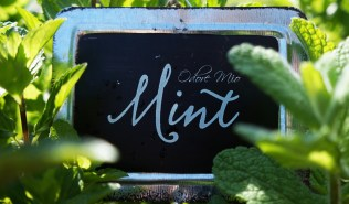 Odore Mio Mint Oil