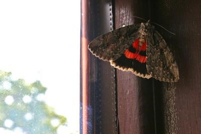 Mol sedící na rámu okna