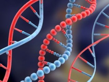 Израиль принял решение брать у туристов образцы ДНК