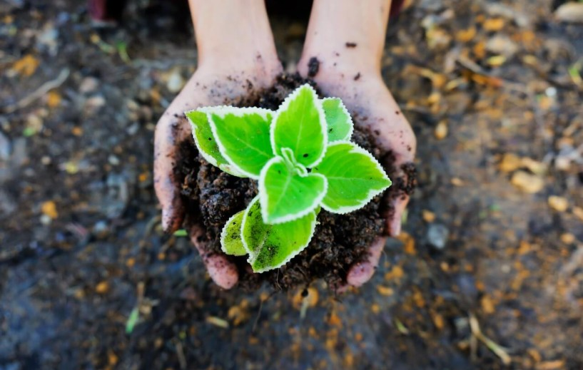 edukacja-ekologiczna