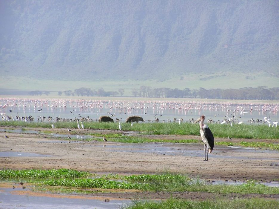 hyena, flamingo, maribou stork
