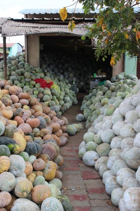 a bounty of melons