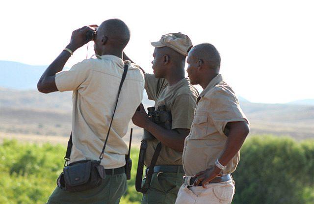 looking for rhino