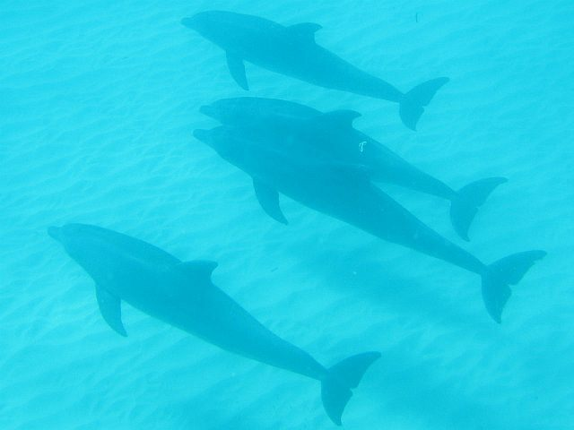 getting close to dolphins