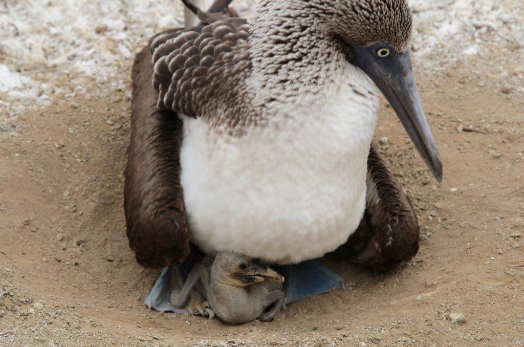 peeking newborn