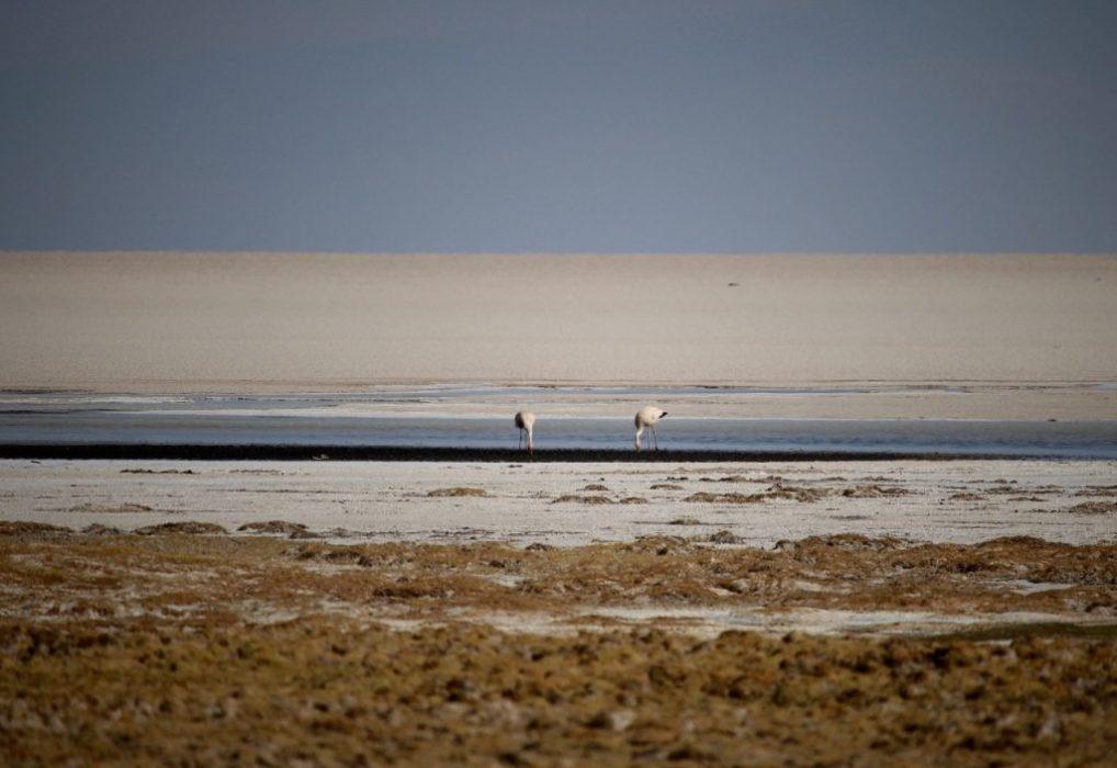 birdlife at the edge of the salar