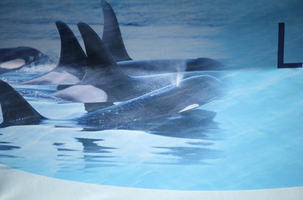 the only orcas we see