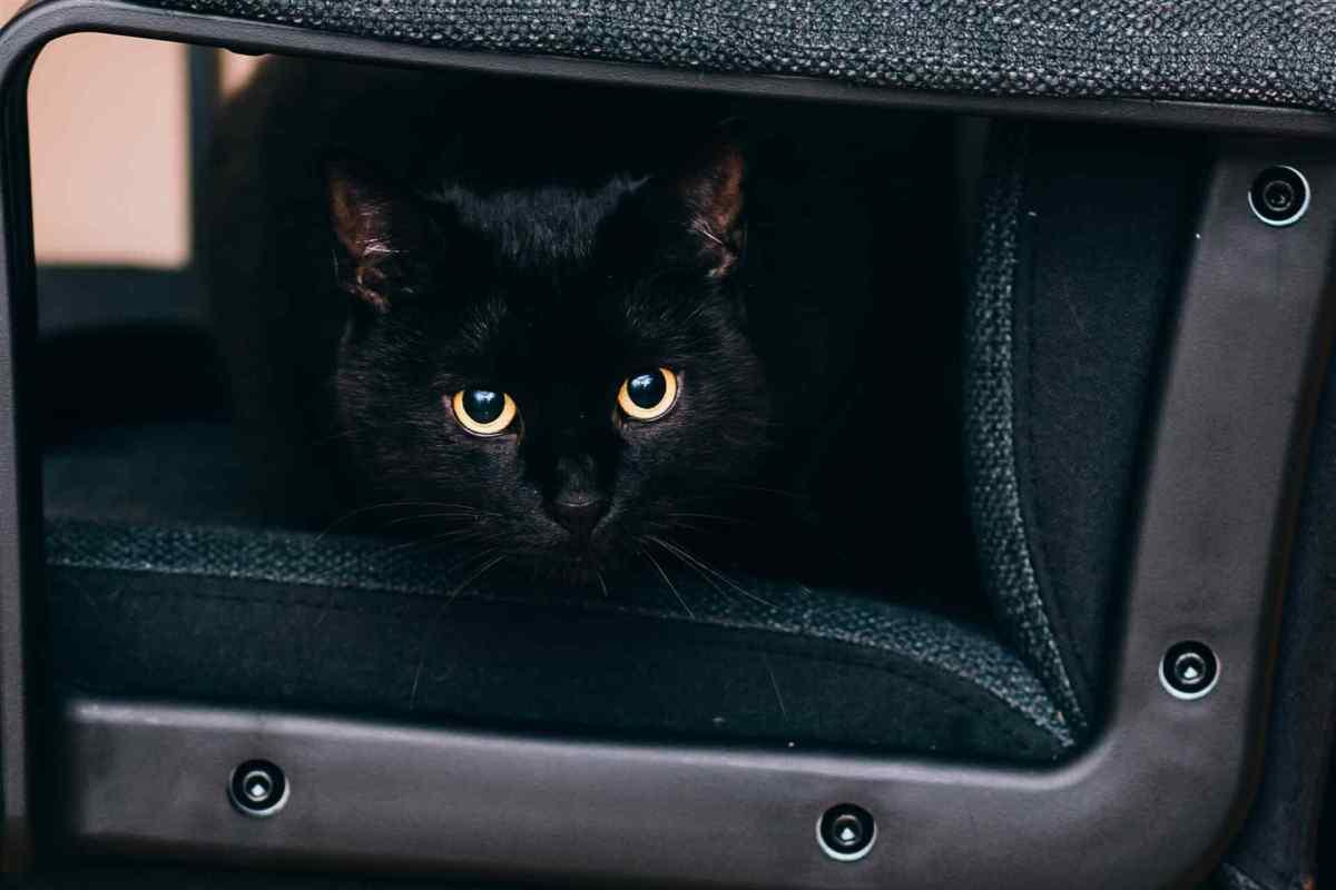 PETS-cats5.jpg?fit=1200%2C800