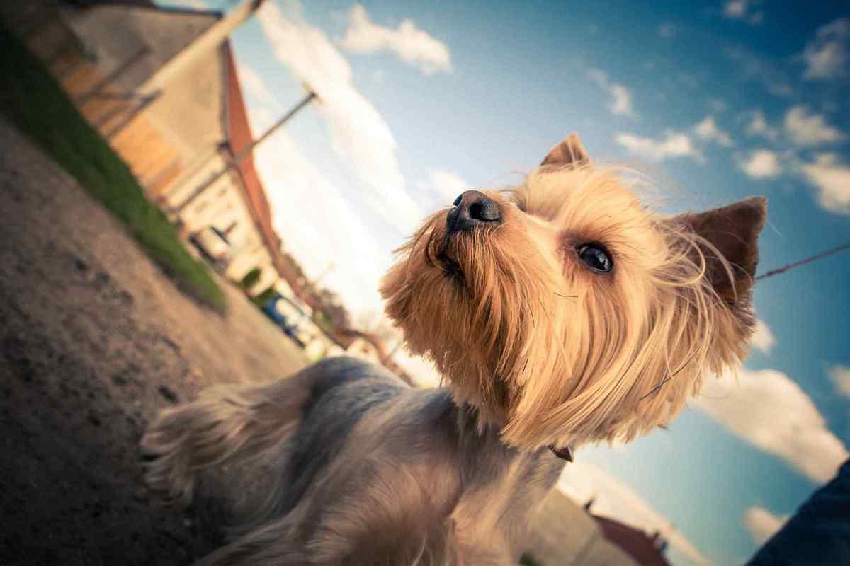 PETS-dog5.jpg?fit=1200%2C800