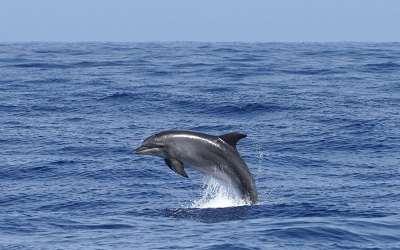 La Gomera – Ozeanische Woche Klassik
