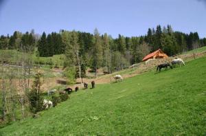 Pferdeweide for Ferienhaus Liebenfels