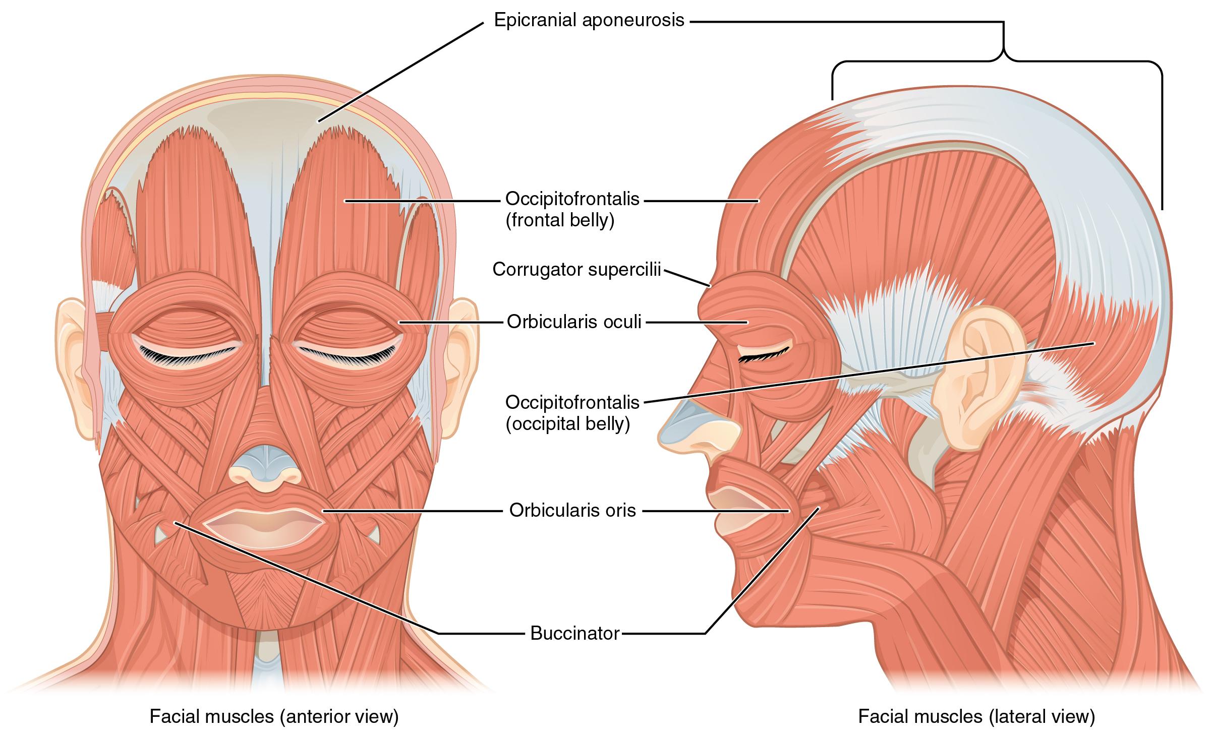 Ear Real Inside Body Part