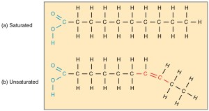 This diagram shows the chain structures of a saturated and