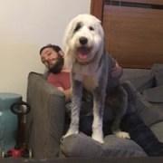 Iggy loves a nice lap!