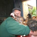 poulets sur l'épaule