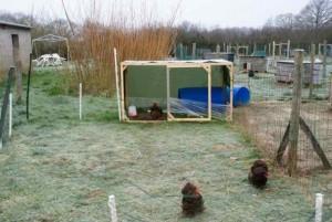 """Cage d'élevage reconvertie en poulailler pour les """"choco bis"""", avec parc mobile"""