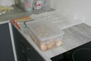 Trempage sanitaire des oeufs avant mise en incubation ou expédition :)