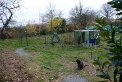 filet à poule en place, cabane en place, les poulets visitent !!