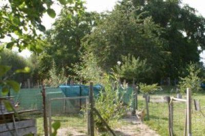 le jardin des poules de Brahmaland