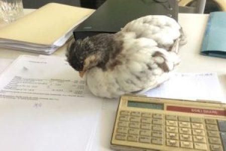 P'Ang endormie sur les factures !