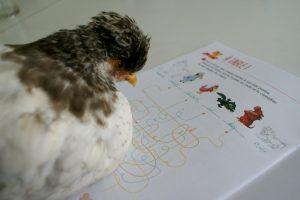 P'Ang, installée sur son livret, apprend l'anglais