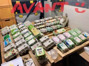 stockage de boites à oeufs contenant les oeufs fécondés.