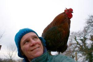 mon coq orpington nain, Ferrero, juché sur mes épaules !