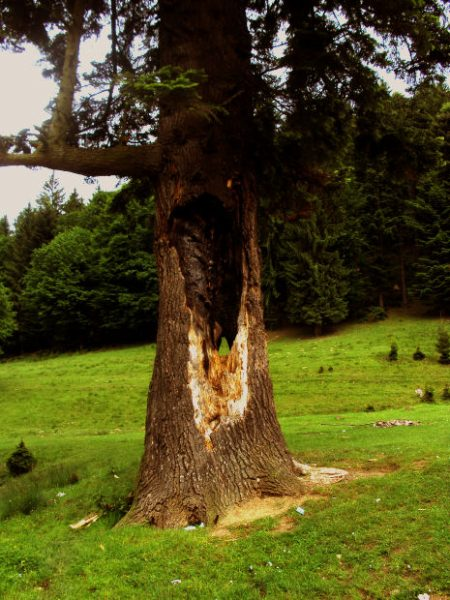 Burned tree from lightning at Morguefile.com