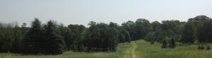 trees15