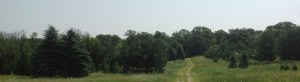 trees16