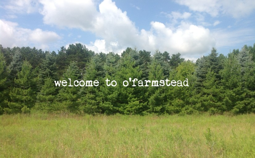 welcome to o'farmstead!