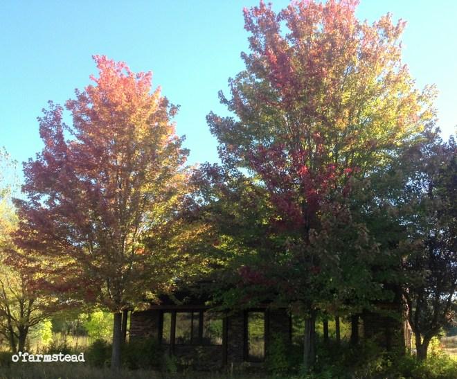 fall at the farm week 1