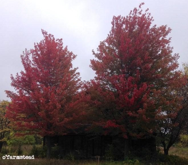 fall at the farm week 2