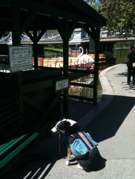 No pets allowed on the Swan Boats!