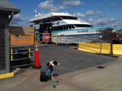 Hank hopes to take the hi-speed ferry. Unfortunately his mom is too cheap and too chicken.