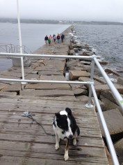 It was very windy and Hank was not happy. That's the breakwater behind him.