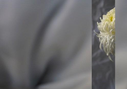 Sábanas blancas, 2012
