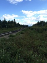 Train tracks in Denali National Park