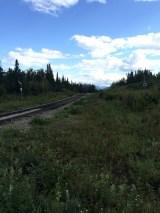 Train tracks in Denali National Park