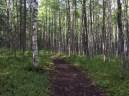 Shady trail - Dew Mound Trail