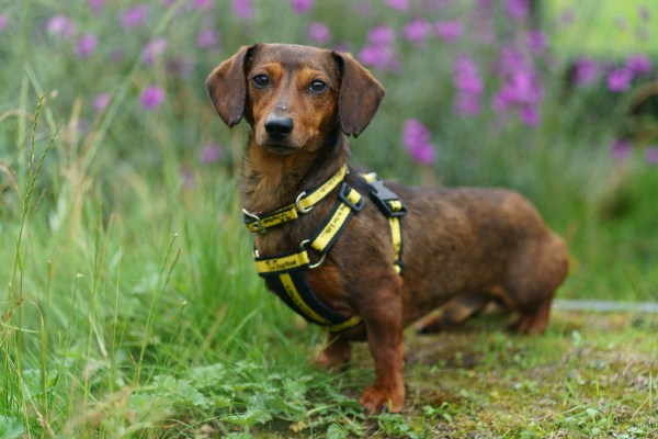 Family 'Dogfished' by Dachshund Doggy Dealer