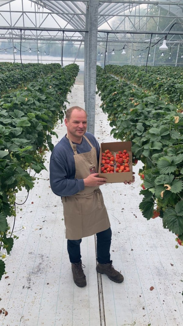 Tipperary Grower Welcomes First Strawberries of the Season