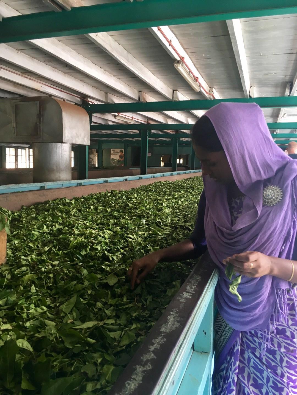 Sri Lankan woman talks about the tea making process at a tea plantation in Sri Lanka