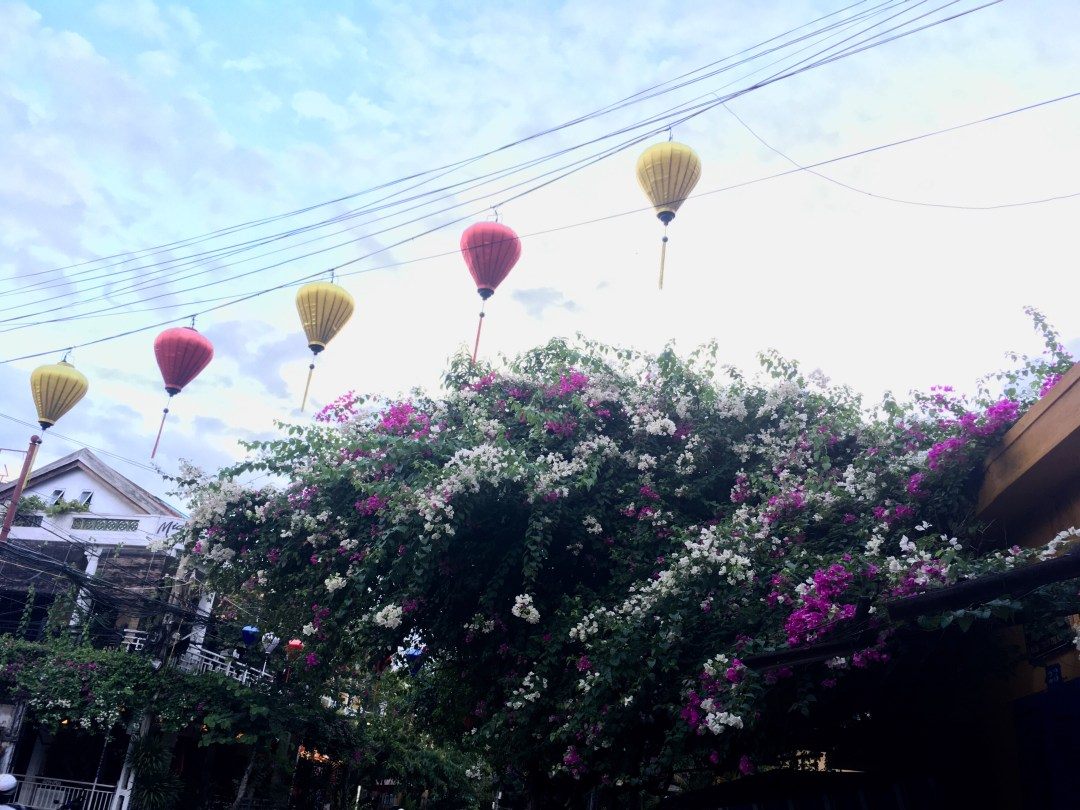 Silk Vietnamese lanterns and flowering trees line the streets of Hoi An, Vietnam