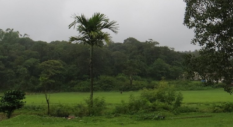 Spectacular Coorg in Rainy Season