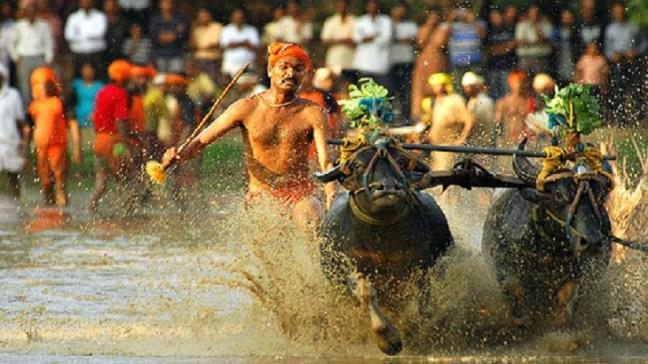 Kambala - Famous Village sport in Udupi, Udupi, Places to visit in Udupi, Udupi Temples, Udupi Krishna Temple