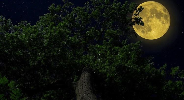 चांद पर एक और कविता
